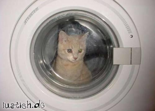 Katze Waschen Bild Lustich De
