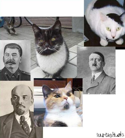 Katze Mit Bart