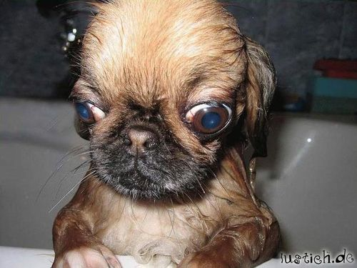 How Look Like Mench On Dogs