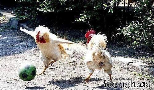 hühner spiel
