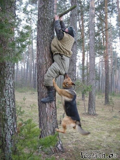 Hunde Lustichde