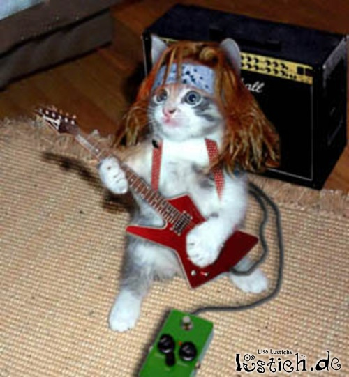 17871 rock n roll katze