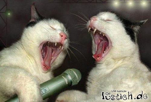 Katzen Konzert