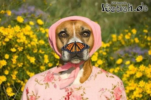Dogs And Butterflies Grooming