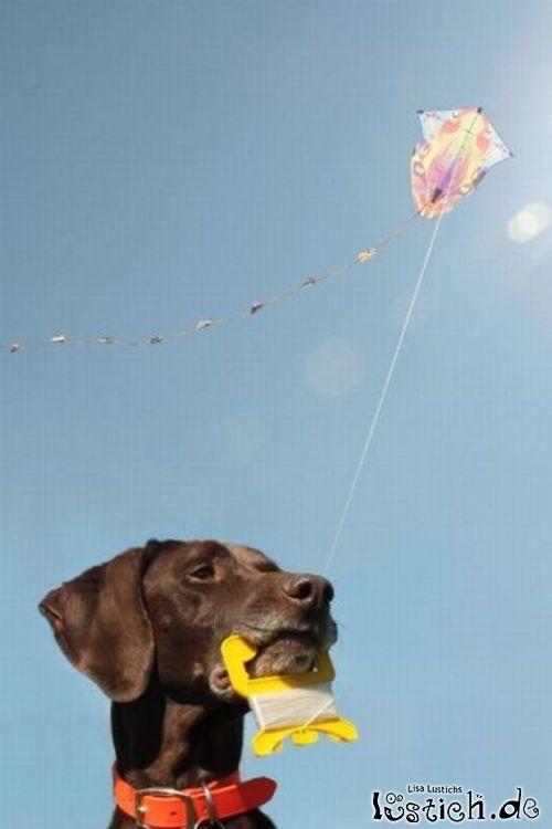 25997 hund laesst drachen steigen