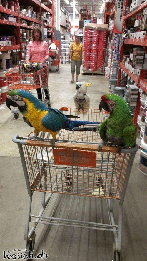 Neues vogelhaus bauen bild for Neues bauen