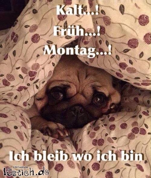 morgens früh aufstehen