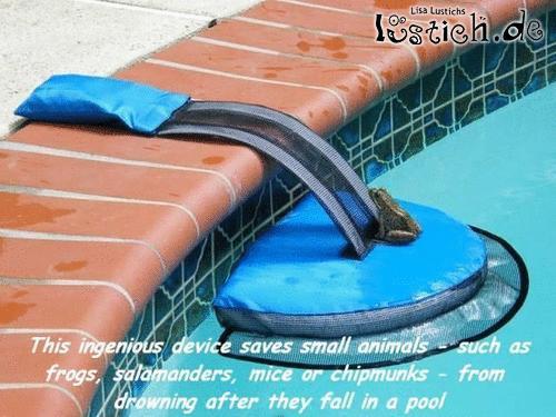 Kleintiere vom schlimmen Pool-Tod retten