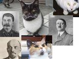 Katzen mit Bart