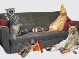 Besoffene katzen