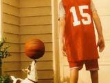 Basketballhund