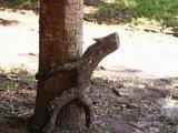 Baum umarmt Baum