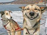 Fröhlicher Hund