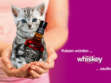 Katzen würden Whiskey saufen