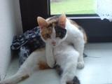 Chillout-Katze