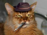 Pete Dohertys Katze