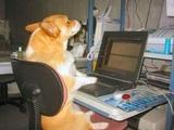 Hund vor dem Laptop
