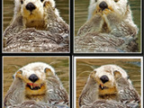Ein Otter ist entsetzt