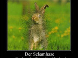 Schamhase