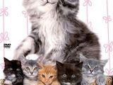 Katzenbabies groß und klein