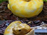 Python zum Geburtstag