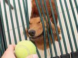 Gib mir den Ball