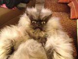 Böse Katze