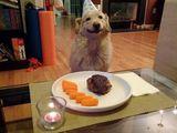 Hundegeburtstag