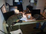 Katzentastatur