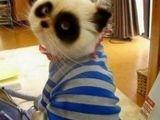 PandaKatze