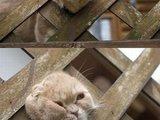 Aufdringliche Katze