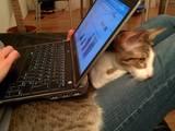 Der Laptop war zuerst da