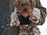 Wer will Winter haben?