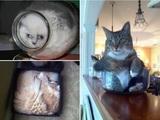Gelenkige Katzen