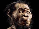 Neue Urmenschenart entdeckt