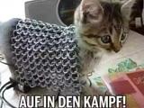 Katzenritter