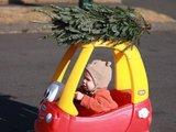 Weihnachtsbaum besorgen