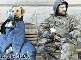 Obdachloser Hund