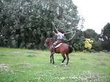 Pferd kann Seilspringen