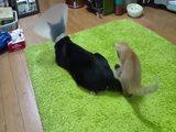 Nerviges Kätzchen