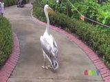 Der Chef im Zoo