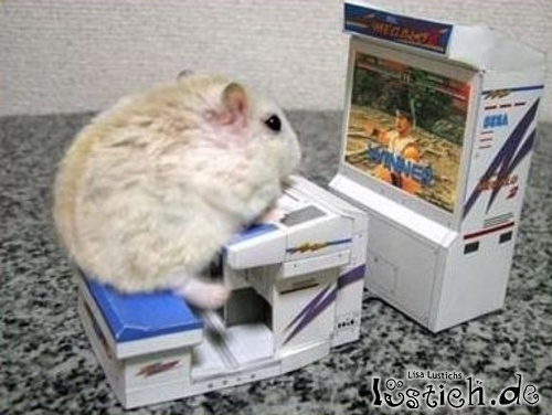 konsole f r hamster bild. Black Bedroom Furniture Sets. Home Design Ideas