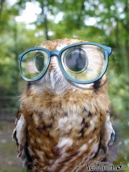 eule mit brille bild  lustichde