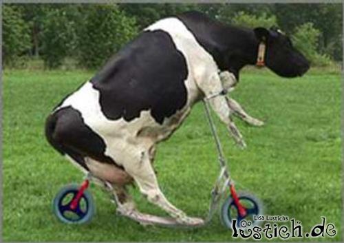 Imagenes Vacas Animadas: Roller Kuh Bild