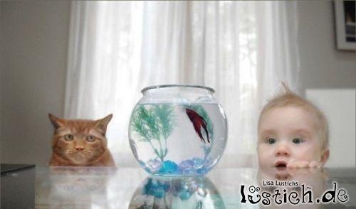 Umzingelt Fisch
