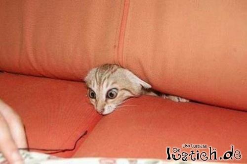 Katze in der Sofaritze