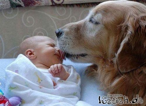 Hund küsst Baby