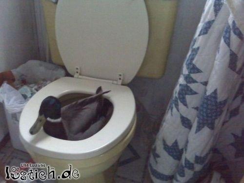 Dans les toilettes de l avion - 1 part 6