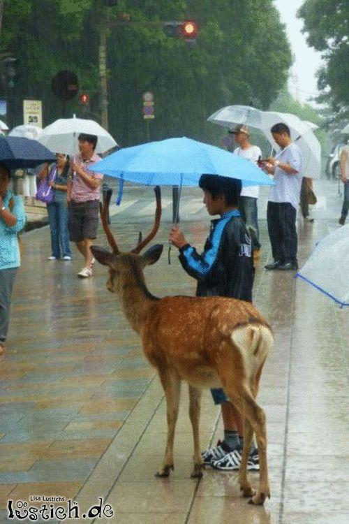 Reh im Regen
