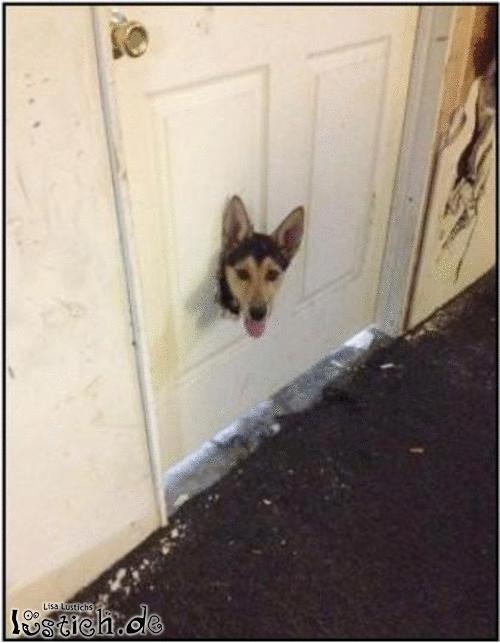 Den Kopf durch die Tür stecken